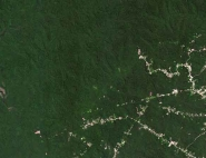 La forêt Amazonienne vue par Venµs